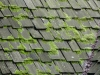 BEFORE: Mossy Cedar Roof Before Professional Cleaning in Edina