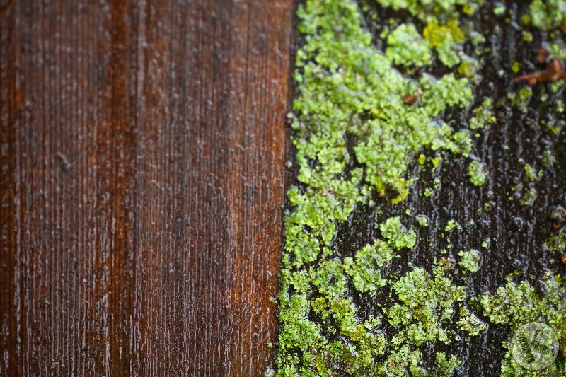 CLOSE-UP: Cedar Roof Cleaning - Look! No Damage!