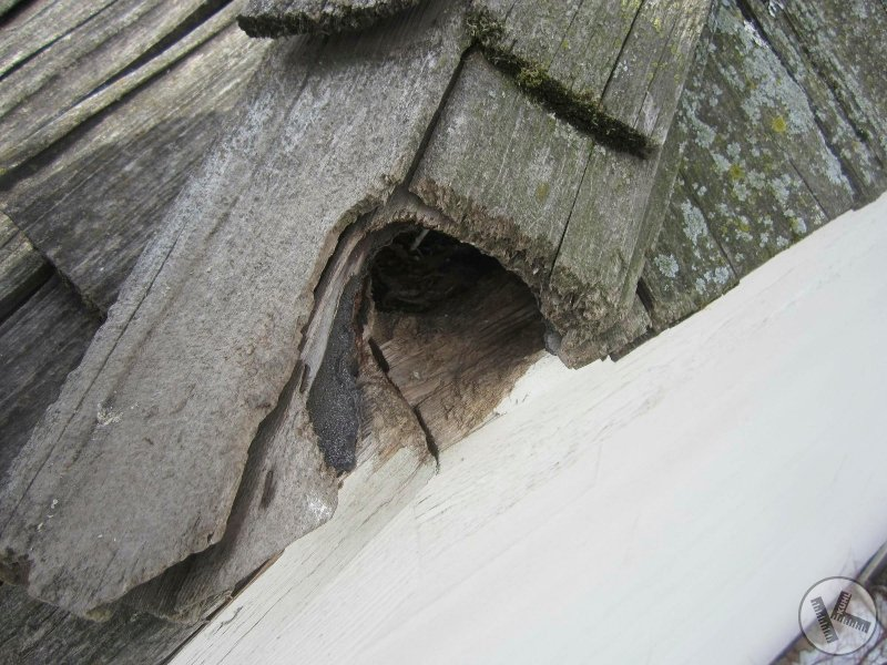 Animal Damage To Homes Kuhl S Contracting