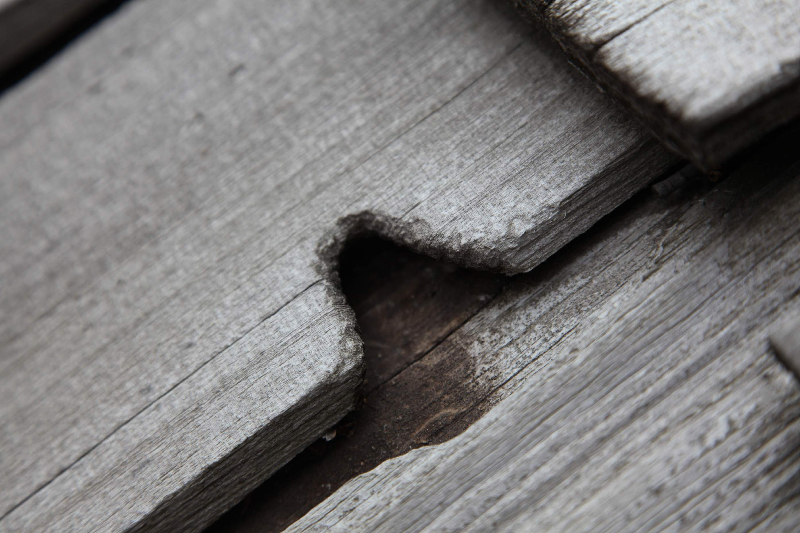 mouse-chewing-damage-on-long-lake-cedar-roof
