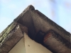 Bats & Mice Getting into Minneapolis Home Through Roof Corner