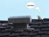 bird-psyched-by-lame-roof-vent-in-edina