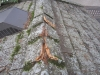 repairing-minneapolis-cedar-roof-after-squirrel-damage-43