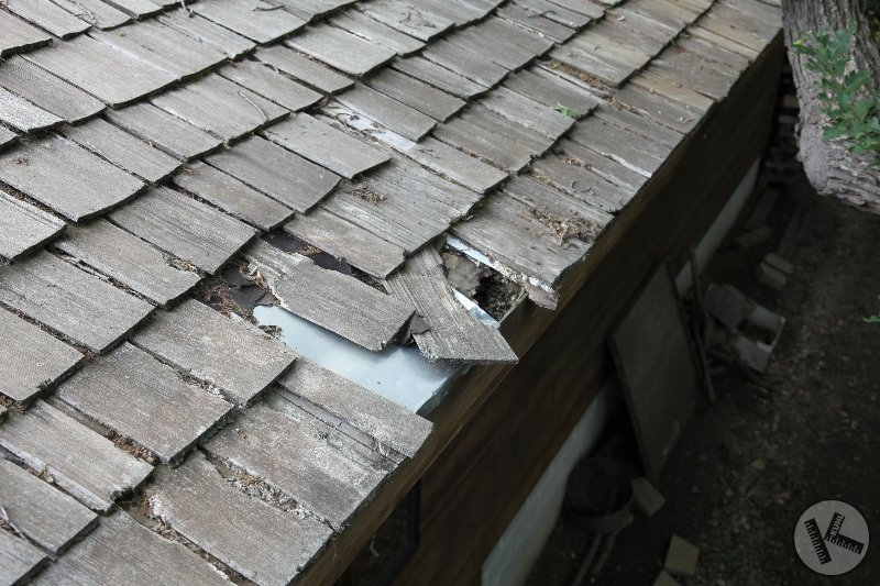 Raccoon Damage to Roof in Hopkins