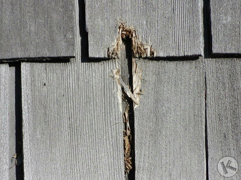 Woodpecker Damage to Home Roof & Siding in Twin Cities