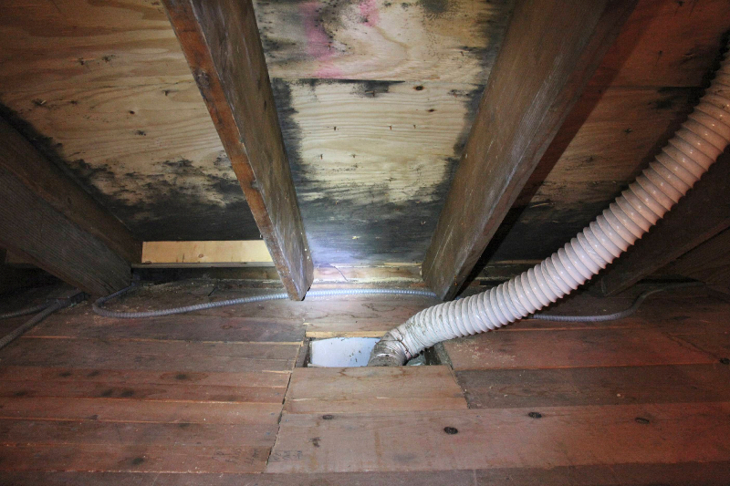 Minneapolis roof leak causes bad mold problem