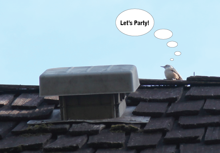 Inexperienced Minneapolis roofer uses the wrong roof vent