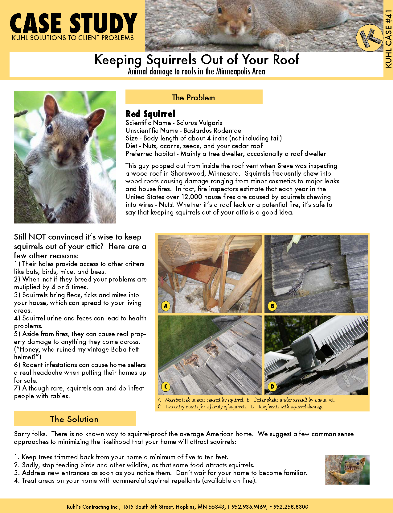 Keeping Squirrels Out of Your Roof: Animal Damage Tips